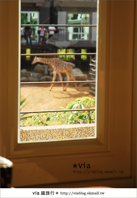 【新竹住宿】來去和動物住一晚~關西六福莊生態渡假旅館47