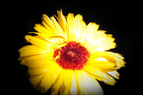 flower-9