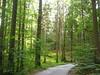 bosco in Baviera