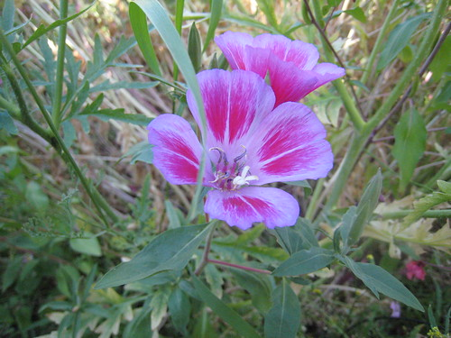 Flowers (486)