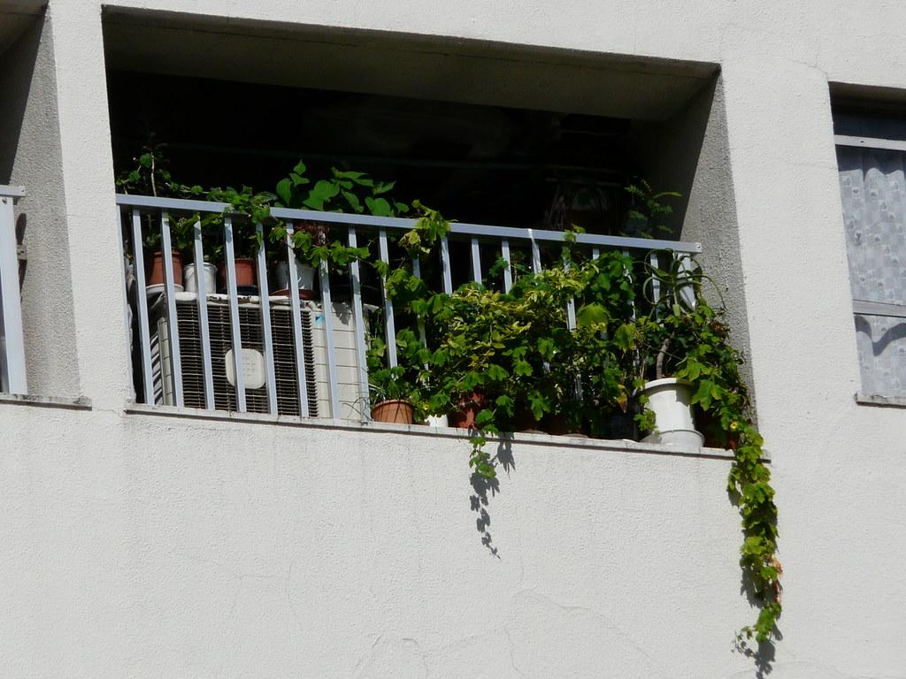 Highrise Balcony Gardens