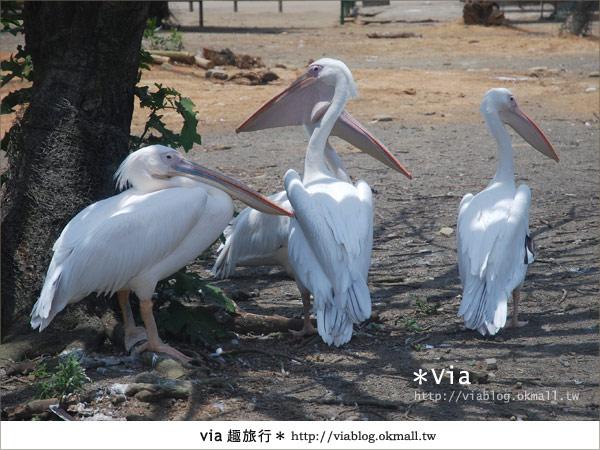 【關西六福莊】精彩秘探野生動物園/DIY手作/農趣樂~!30
