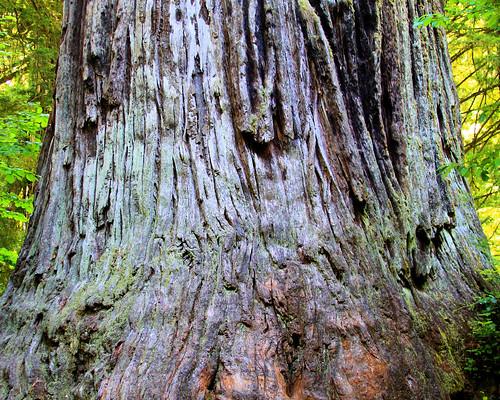 8x10 Redwoods IMG_0005