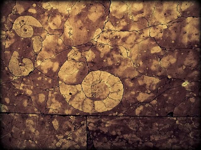underground snail