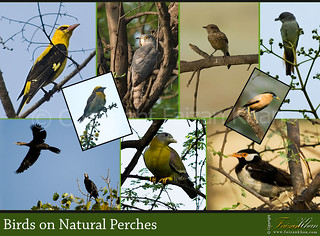 Collage of Birds on Natural Perches
