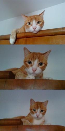 moj mačak Žućo