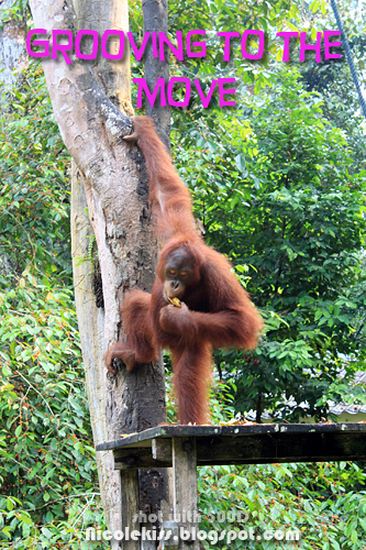 orang utan doing the move