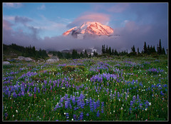 Rainier Magic (Mike Hornblade) Tags: washington wildflowers mtrainier lupine indianpaintbrush spraypark