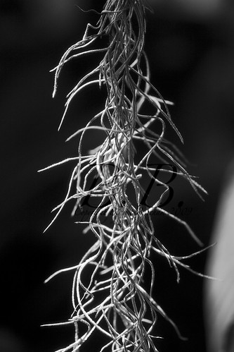 Black and white plant 3