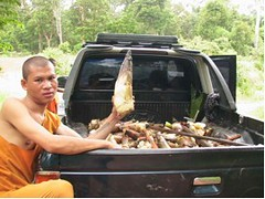 Carbon Covenant - Cambodia: Bamboo-shoots-from-the-mcf