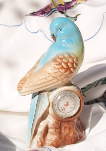 Vintage budgerigar ... with temperature gauge!