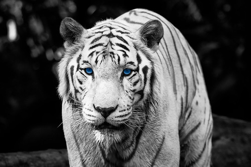 Color Key Week – The Eye Of The Tiger