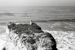 032 (m67smith) Tags: bw film beach blackwhite kodak plusx elmatador fed3