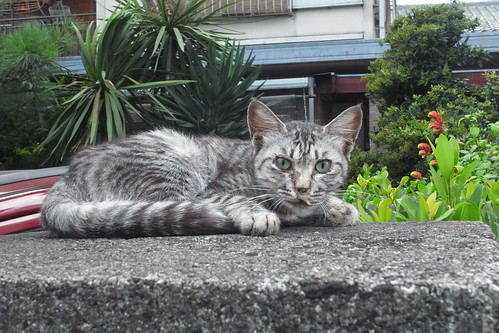 Today's Cat@2010-08-27