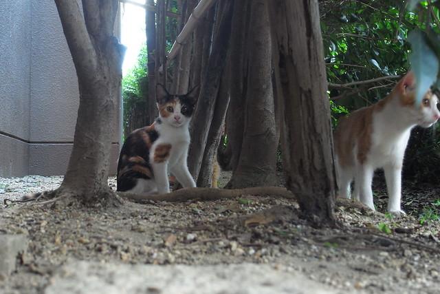 Today's Cat@2010-08-29