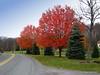 Red Tree (Rafakoy) Tags: road red color colour tree fall nature colors grass digital canon colours pennsylvania pavement path ps pa 2008 honesdale laurella sd600 aldorafaelaltamirano rafaelaltamirano aldoraltamirano