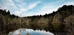 Reflection (shoyo10) Tags: plant reflection forest canon landscape brunei 30d sigma1020mmhsm