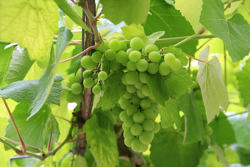 Vila Viniteca en la cultura del Vino