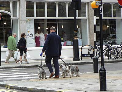 l'homme et ses chiens.jpg