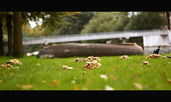 mushroom city (Vlien*) Tags: autumn holland nature amsterdam canon mushrooms 50mm boat dof bokeh nederland urbannature f18 paddos paddenstoelen mushroomcity 50mmf18canon paddocity
