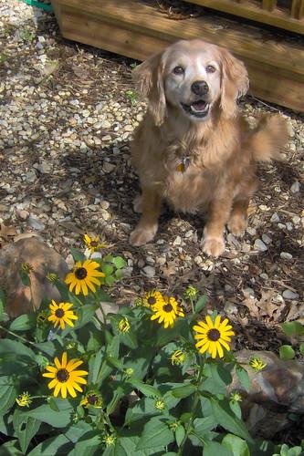 Belle, 13 years