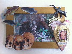 Darwin Picture Frame (IC7)