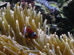 IMG_0251 (Alejandro Perez M.) Tags: medellin parqueexplora acuario