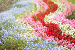 River of Dreams (jasohill) Tags: bokeh color flowers nature city iwate red summer 2017 hachimantai pink photography life river pastel japan blue japanese landscape background wallpaper