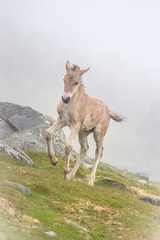 1 week old foal (CecilieSonstebyPhotography) Tags: grass rock youngster baby young foal canon wet norway markiii animal langedrag føll canon5dmarkiii hest horse fog ef100400mmf4556lisiiusm 1weekold mist rain ngc