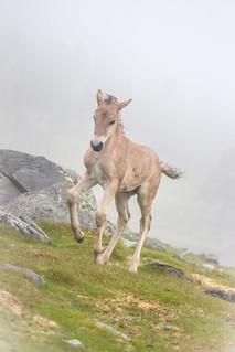 1 week old foal