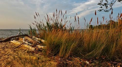 Grassy Beach Scene