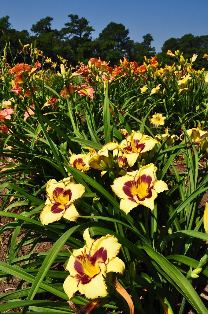 Sterrett Gardens (6)