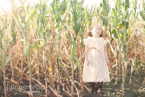 corn sunflare 2