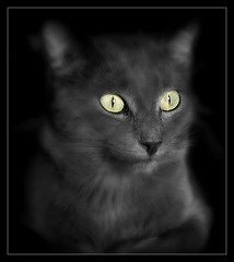 859 Leni (Nebojsa Mladjenovic) Tags: light portrait pet cats mist macro animal animals fauna digital cat lumix eyes kat feline chat panasonic gato katze animaux portret closup gatto onblack fz50 svetlost macka animauxdecompagnie impressedbeauty mladjenovic mygearandmepremium