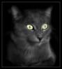 859 Leni (Nebojsa Mladjenovic) Tags: light portrait pet cats mist macro animal animals fauna digital cat lumix eyes kat feline chat panasonic gato katze animaux portret closup gatto onblack fz50 svetlost macka animauxdecompagnie impressedbeauty mladjenovic mygearandmepremium