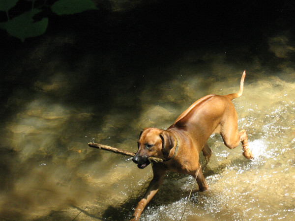 Koby-'field-n-stream'