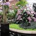 Orchid Garden_2