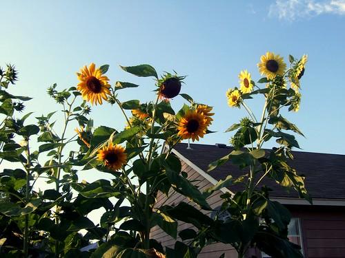 garden update