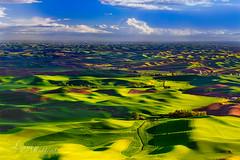 (♡Lynn♡) Tags: green washington nikon hills rolling colfax wheatfields palouse steptoe steptoebutte thepalouse d700 dsc1844lms40wm nwphotoworkshops