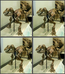 LNYC2010amnh_0700 (qpkarl) Tags: newyorkcity newyork museum stereoscopic stereogram stereophotography 3d unitedstates manhattan stereo stereograph stereography americanmuseumofnaturalhistory stereoscope stereoscopy stereographic canonpowershota460