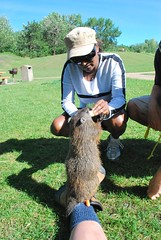 A groundhog sitting on my foot while being fed a banana. (Clyde's Pics) Tags: edmonton munching rivervalley groundhogs sunchaser governmenthousepark clydespics