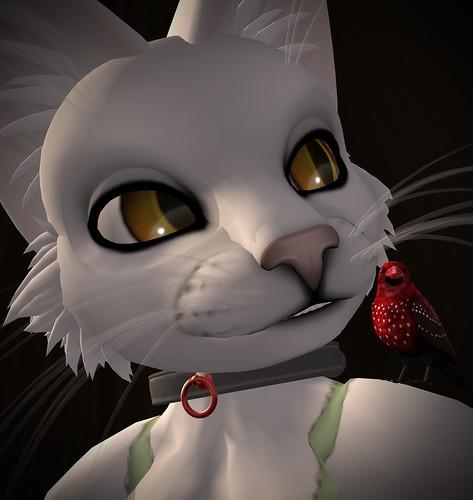 meow02