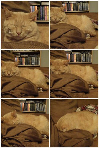 Time Lapse of a Sleepy Cat