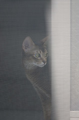Haze_cat_8791 (y_and_r_d) Tags: light portrait pets brown white animal japan cat canon cool asia play artistic unique interior zen minimalism abyssinian simple  myhome roux