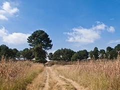 Imagen 10 (cguevara_aguilar) Tags: cielo árbol nube ‡rbol rbol cerrozapotecas