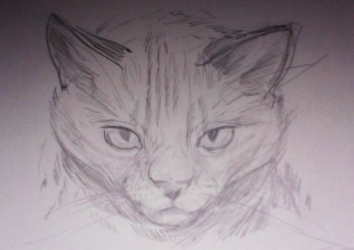 cat_1_lindsaynohl