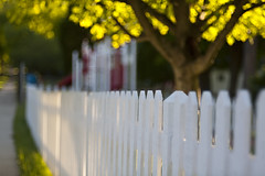 174/365 (mckenziemedia) Tags: white blur tree yellow canon fence eos focus bokeh 5d backlit 365 meyer oof optik project365 stevemckenzie trioplan mckenziemedia 15000refrigeratorscom
