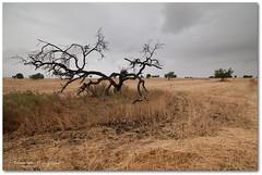 Violence At Home (Zakaria Salhi) Tags: sky tree nature beauty clouds landscape amazing nikon cloudy sigma morocco maroc 1020 d300 zakariasalhi