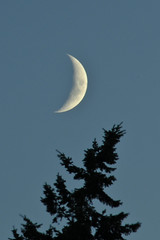 Another beautiful waxing crescent moon (greenwoman46) Tags: moon crescent waxing