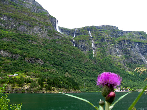 The Fjord, Waterfalls and a Thistle - Nærøyfjord, Norway